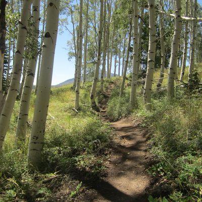Trail Design